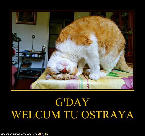 australia,caption,captioned,cat,good day,greetings,hello,tabby,upside down,welcome