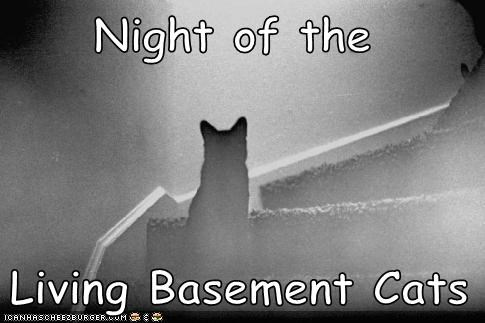 Night of the   Living Basement Cats