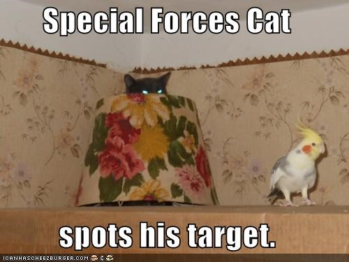 Special Forces Cat  spots his target.