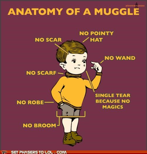 Anatomy of a Muggle