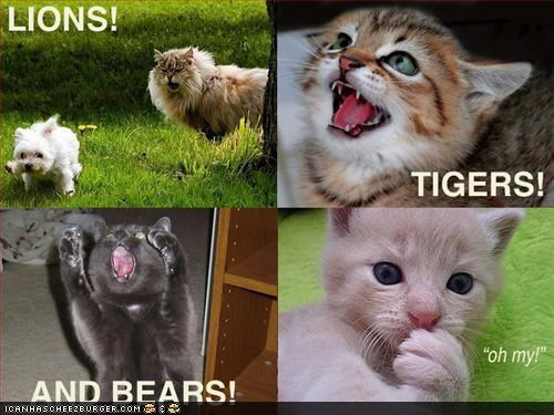 bears,caption,captioned,cat,Cats,expression,impressions,lions,oh my,surprised,tigers