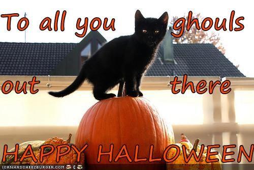 caption,captioned,cat,ghouls,halloween,happy,meowloween,perching,pumpkins