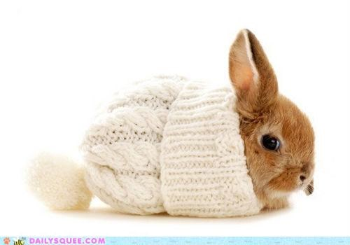 acting like animals,bunny,clothing,cold,dont-judge,dressing,Hall of Fame,happy bunday,hat,rabbit,warm,warming up,warmth,winter