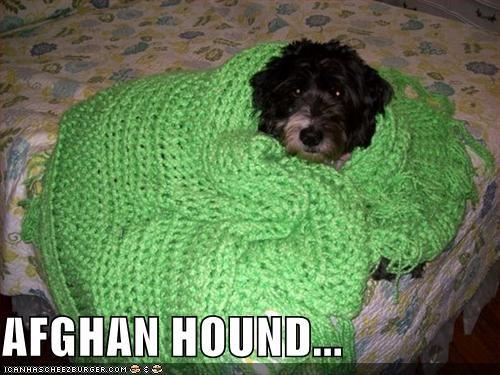 AFGHAN HOUND...