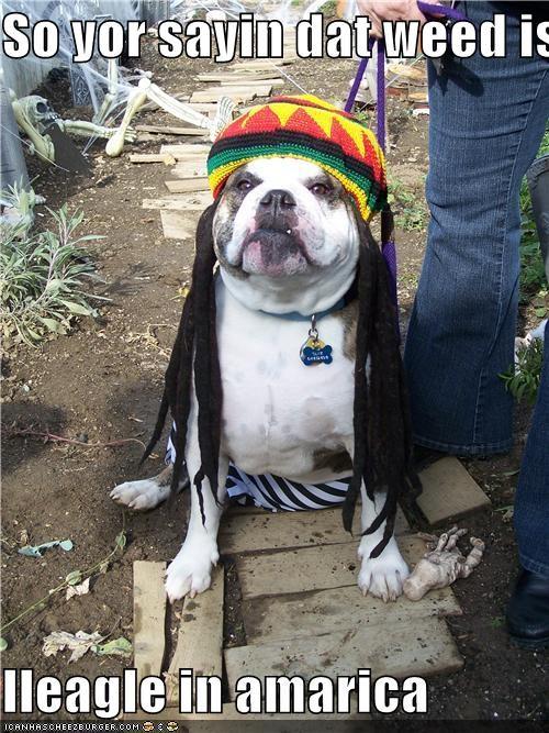 So yor sayin dat weed is   Ileagle in amarica
