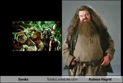 Ewoks Totally Looks Like Rubeus Hagrid