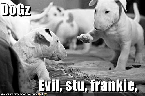 DoGz  Evil, stu, frankie,