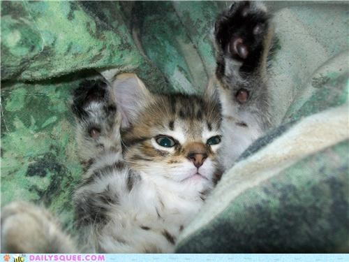 adorable,baby,blanket,blankets,cat,cuddling,hiding,kitten,pun,reader squees,under