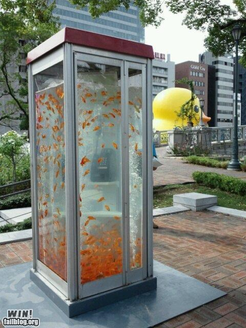 art,fish,fish tank,goldfish,installation,pet,phone booth