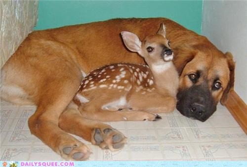 cuddling,deer,doe,doe eyes,dogs,Hall of Fame,if looks could kill,Interspecies Love,puppy eyes,Staring