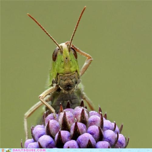 Acting Like Animals: Confused Grasshopper is Confused