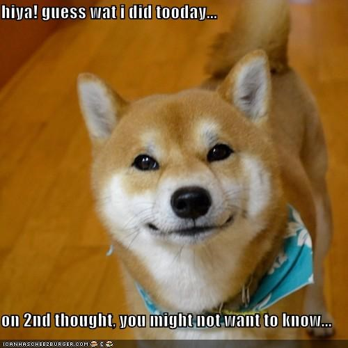 bad dog,curious,guess what,guilty,on second thought,shiba inu