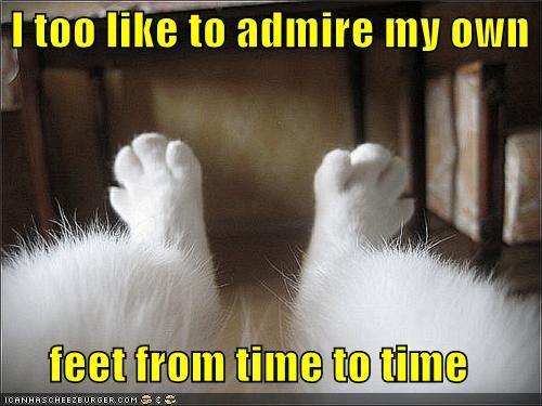 admire,admiring,caption,captioned,cat,feet,I,like,occasionally,paws,Staring,time