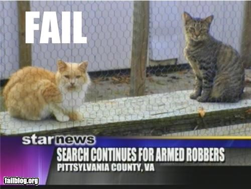 Probably Bad News: Cat Burglars Up The Ante