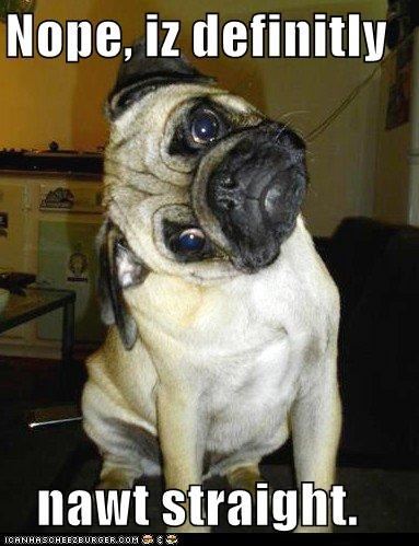 crooked,not straight,pug,slanted,uneven