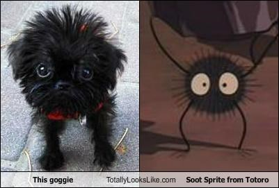 This Goggie Totally Looks Like Soot Sprite from Totoro