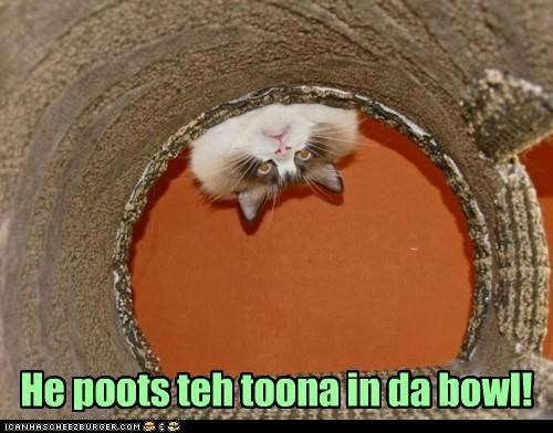 bowl,caption,captioned,cat,hole,puts,quote,silence of the lambs,Staring,tuna