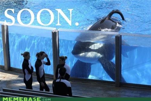 Tilikum, KILLER Whale
