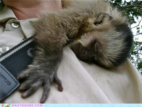 baby,capuchin,capuchin monkey,clinging,clutching,cuddling,go,holding,let,letting go,monkey,never,quote,squee spree,titanic