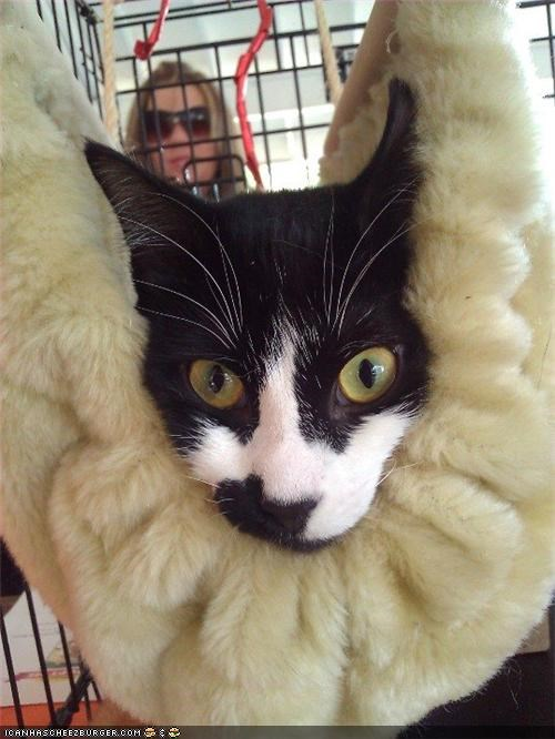 Cocoon Kitty