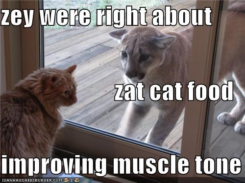 zey were right about  zat cat food improving muscle tone