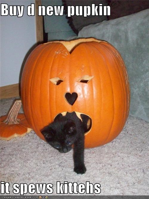 Buy d new pupkin  it spews kittehs