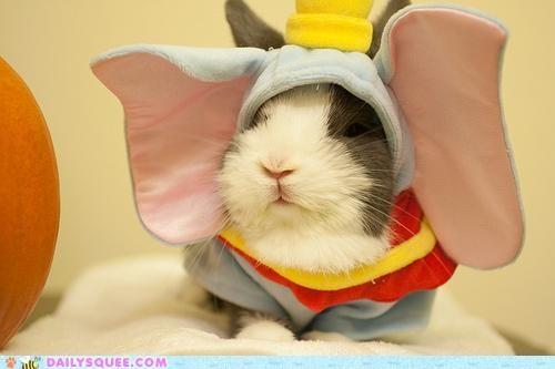 acting like animals,bunny,costume,dressed up,dumbo,elephant,Hall of Fame,halloween,happy bunday,rabbit