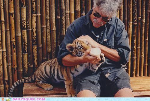 baby,bottle,bottle feeding,cub,do want,drinking,feeding,milk,tiger