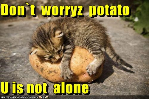 alone,best of the week,caption,captioned,cat,cuddling,dont,friends,friendship,Hall of Fame,holding,kitten,not,potato,worry