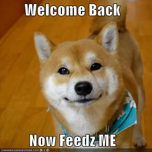 Welcome Back  Now Feedz ME