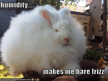 humidity.....  makes me hare frizz