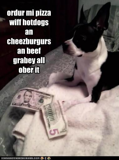 boston terrier,cheeseburgers,delicious,delish,food,hotdogs,money,noms,order pizza,ordering pizza,people food,pizza,yummy