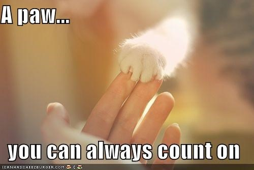 A paw...  you can always count on