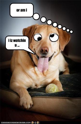 i iz watchin u ...