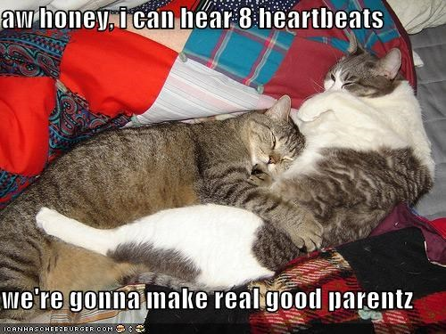 aw honey, i can hear 8 heartbeats  we're gonna make real good parentz