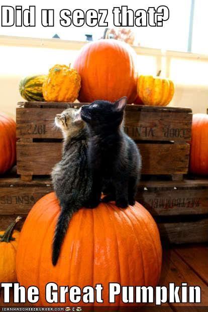 Did u seez that?  The Great Pumpkin