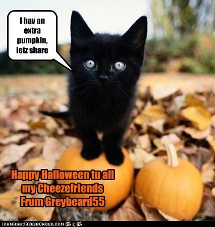 I hav an extra pumpkin, letz share