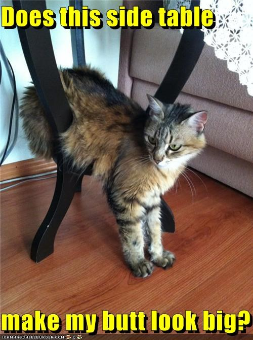 Awkward,big,butt,caption,captioned,cat,does,look,make,question,side,sitting,table