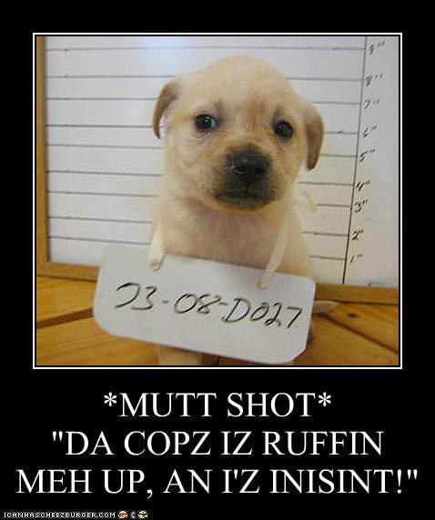 breaking the law,cops,criminal,golden retriever,law,law breaker,mug shot,mutt shot,police,puppy
