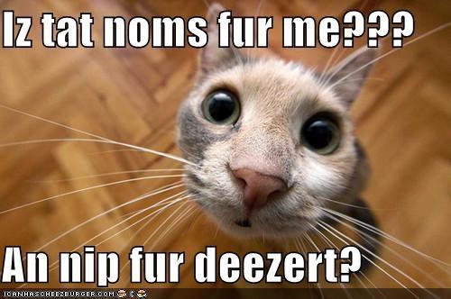 Iz tat noms fur me???  An nip fur deezert?