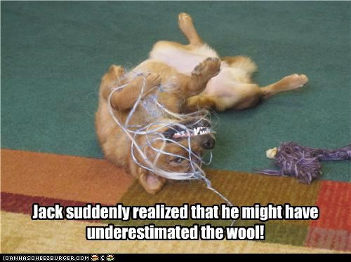 Jack suddenly realized that he might have underestimated the wool!