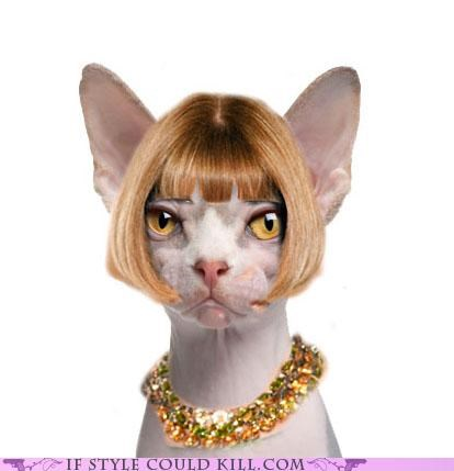 anna wintour,Cats,cool accessories,kittehs