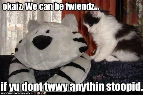 anything,be,can,caption,captioned,cat,caveat,dont,friends,kitten,Okay,stuffed animal,stupid,suspicious,try,we