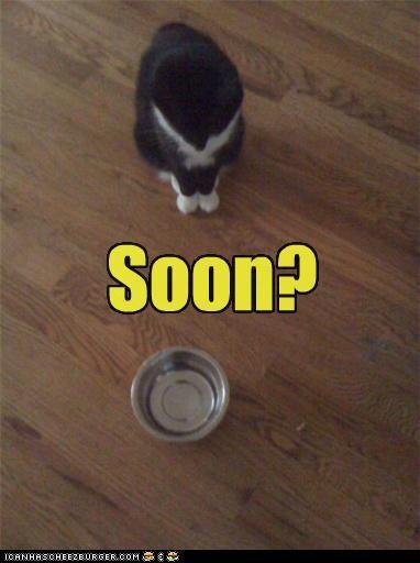 bowl,caption,captioned,cat,do want,empty,noms,SOON,waiting