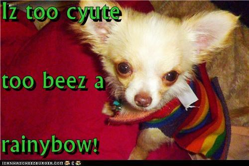 Iz too cyute too beez a rainybow!