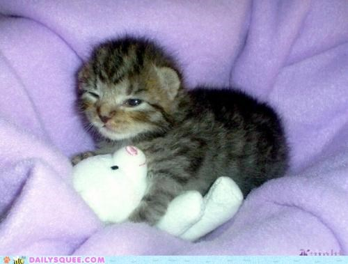 awake,baby,cat,cuddles,cuddling,evil eye,grumpy,Hall of Fame,kitten,nap,napping,Staring,stuffed animal,woken up