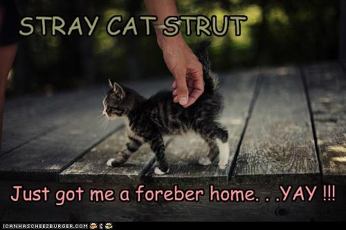 STRAY CAT STRUT