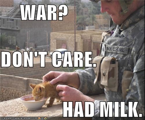 adorbz,aww,best of the week,Hall of Fame,hungry,I Can Has Cheezburger,kitten,love,military,milk,stray cat,stray kitten,sweet,war,war zone