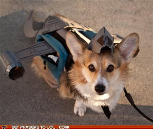 This Dog is Dressed as Serenity