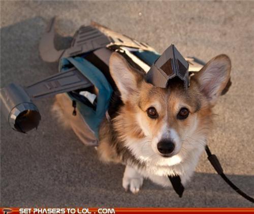 corgi,cute,dogs,Firefly,serenity,spaceship